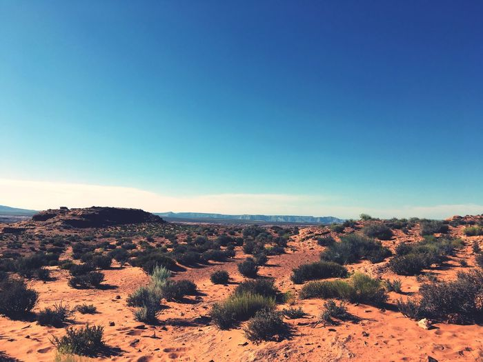EyeEm Selects Tranquil Scene Landscape Nature Scenics Blue Copy Space Beauty In Nature Tranquility Clear Sky No People Outdoors Day Arid Climate Desert Sky Tree Road Trip Arizona Arizona Sky Travel Destinations Physical Geography Sagebrush EyeEmNewHere Breathing Space