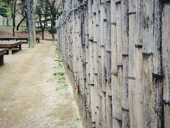 Walking Around Hugging A Tree Tree Taking Photos EyeEm Nature Lover IPhoneography