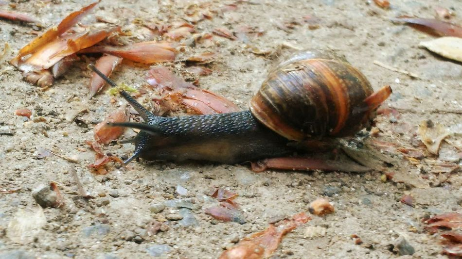 Caracol Schnecke Morning Morning Walk Forest Animals