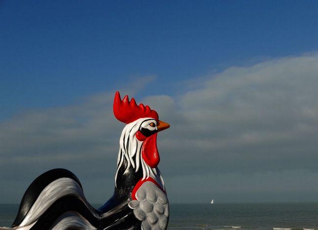 De Haan Belgium Animal Representation Cloud - Sky Sea Horizon Over Water No People Sky Day Water Red Outdoors Dragon Nature Leica D-Lux Sculpture Chicken - Bird Statue View Art Is Everywhere Art Art Outdoors Landscape Sky And Sea