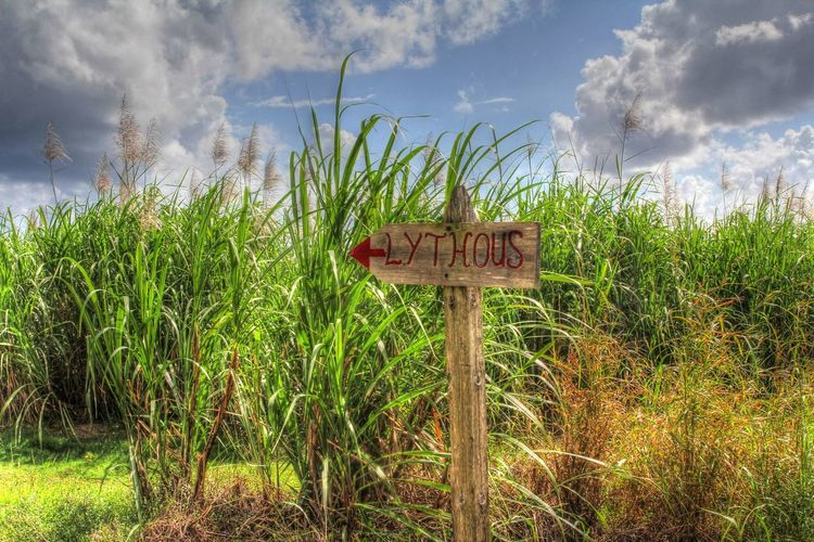 Funy road sign Funny Light House Morant Point Jamaica Lythous Road Sign Sugar Cane Field Sunny Day