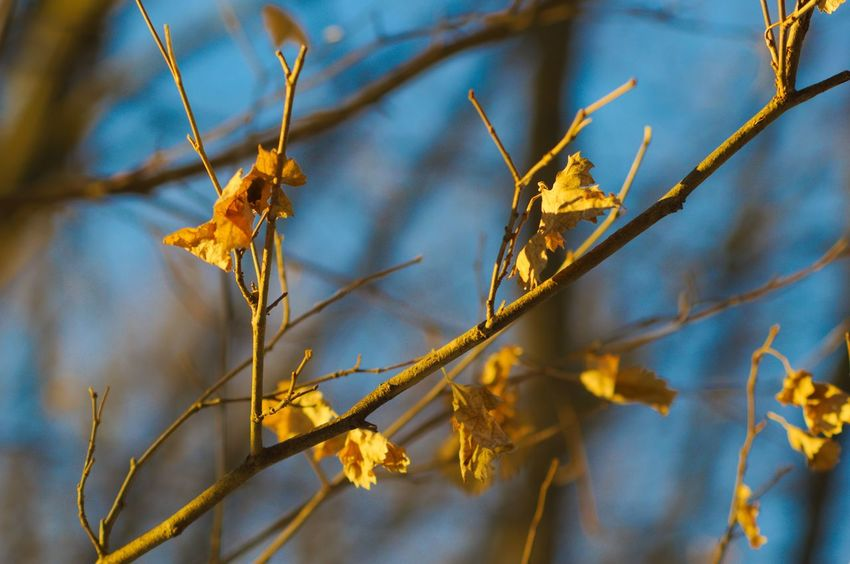 Sunny Baked Leaves Nature No People Twig Beauty In Nature Day Close-up Branch Leaf Outdoors Focus On Foreground Plant Growth Dried Plant Animal Themes Flower Tree