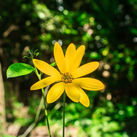 Flower Plant Flower Head Nature Outdoors Beauty In Nature Petal Fragility Day Yellow Close-up No People Growth Freshness