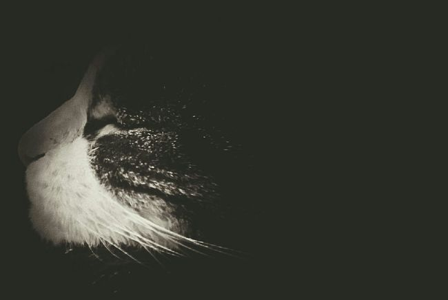 Cat♡ Eyeempetslover My Beautiful Cat Catnapping Blackandwhite Vintage Filter Cat Lovers