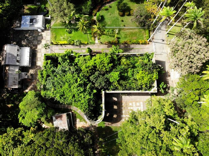 High angle view of trees and plants outside building