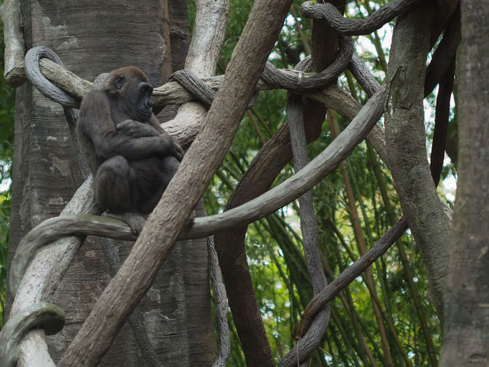 Low angle view of monkey sitting on tree trunk