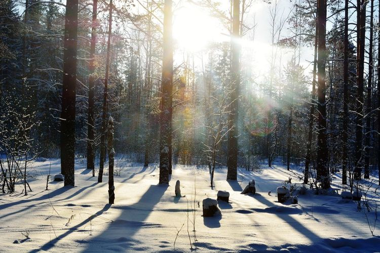 Snow Winter Cold Temperature Sunlight Tree Weather Nature Shadow Outdoors Sunny Day Sun Frozen Beauty In Nature Ski Holiday Pine Tree Forest