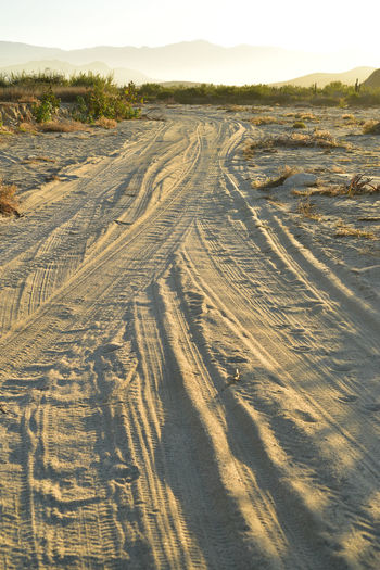 landscape with tire tracks in popular beach road at golden moments of tropical morning in Baja California Sur, Mexico Baja California Sur Beach Photography Mexico Morning Light Day Dirt Road Environment Land Landscape Nature No People Outdoors Scenics - Nature Sky Sunlight Tire Track Tire Tracks Tire Tracks In Sand Tranquil Scene Tranquility