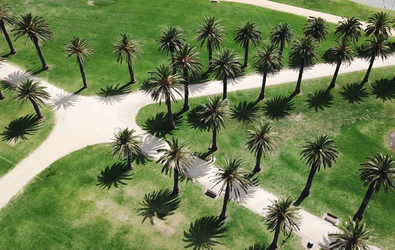 Australia Tropical Directly Above Path Pathway Aerial View Aerial Australia Melbourne Pattern Tree Palm Tree Shadows Plant Green Color Growth Tree Nature No People Beauty In Nature High Angle View Sunlight Environment Tranquil Scene Scenics - Nature Backgrounds Tranquility Outdoors Land Day