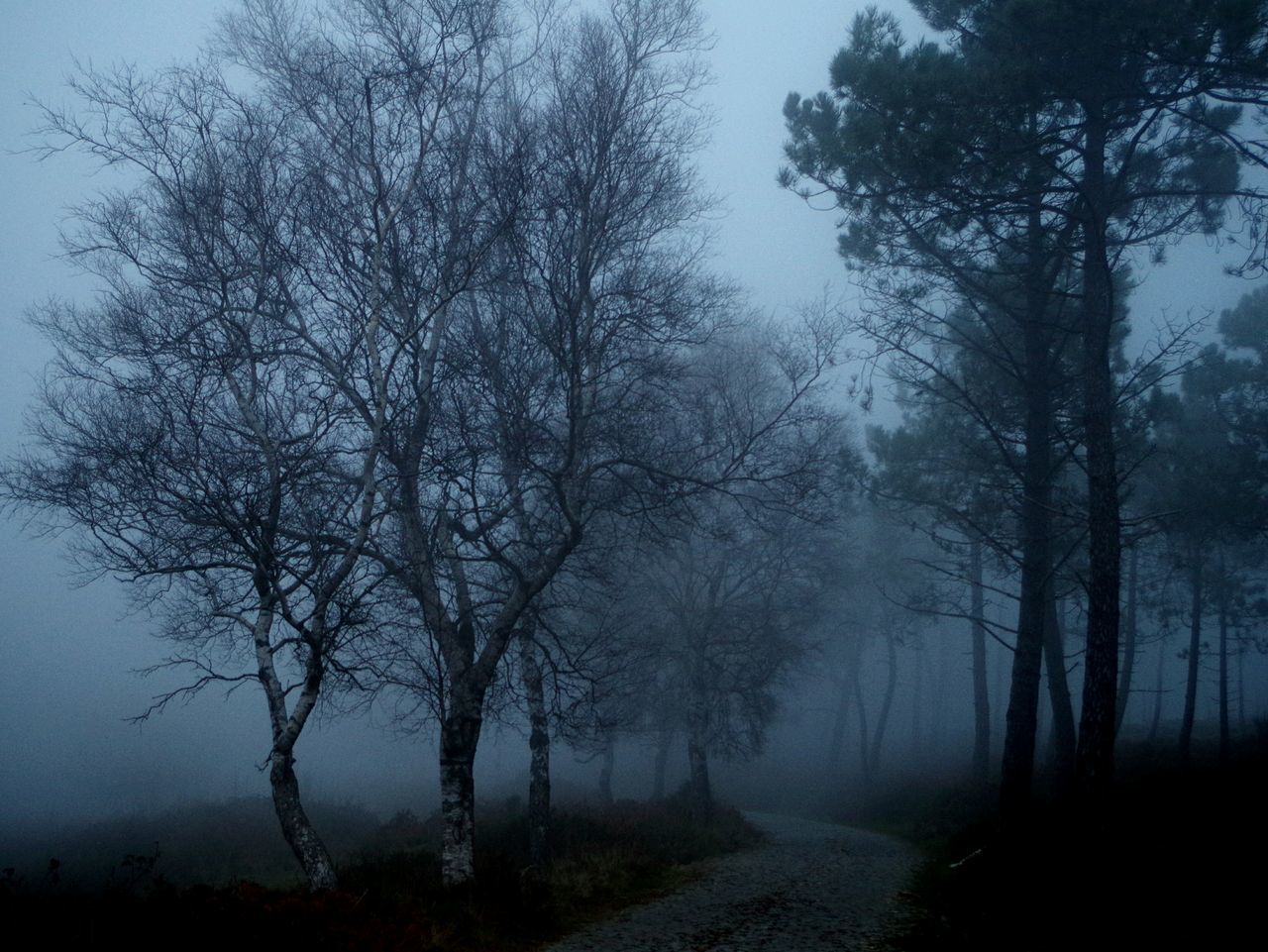 tree, nature, fog, tranquility, bare tree, tranquil scene, no people, autumn, beauty in nature, mist, branch, forest, landscape, scenics, outdoors, hazy, day, sky