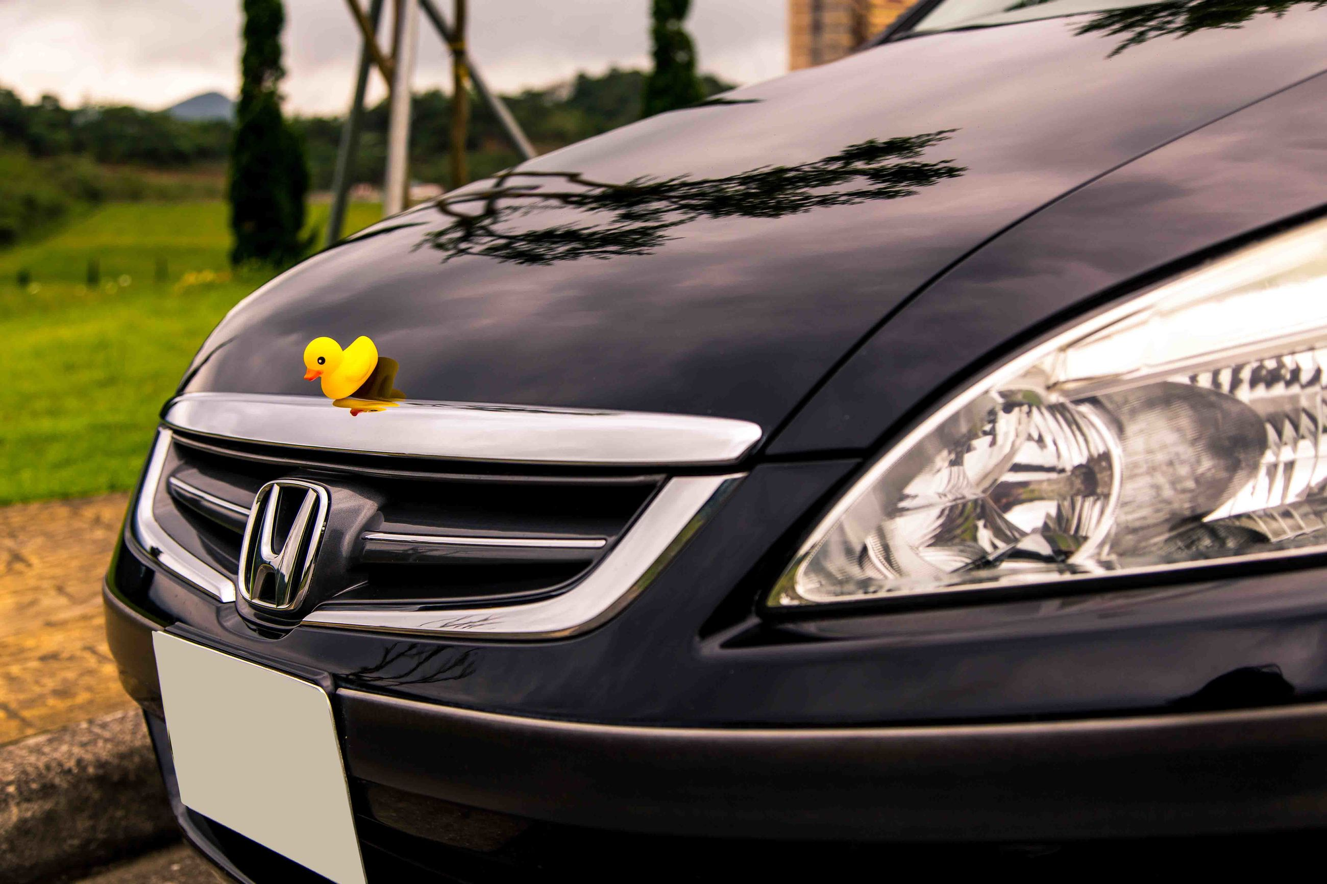 transportation, focus on foreground, mode of transport, close-up, land vehicle, car, tree, day, flower, nature, part of, outdoors, field, no people, yellow, cropped, sunlight, fragility, plant, park - man made space