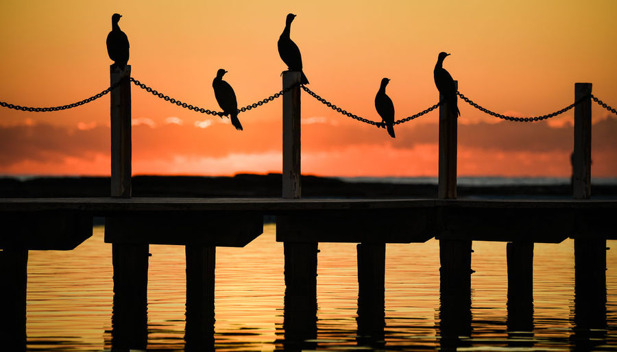 Birds rest on a