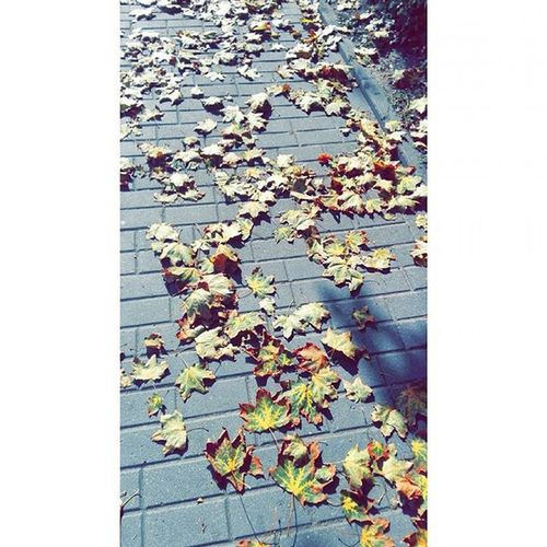 Осень....и красиво,и не хочется.. Fall Autumn Falltime Season  Seasons Instafall Instagood Instaautumn Photooftheday Leaf Foliage Colorful Orange Red Autumnweather Fallweather Nature Beautiful Beauty Amazing