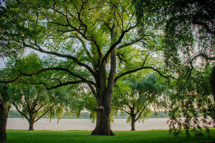 Rise Up Bare Tree Beauty In Nature Branch Growth Nature Outdoors Park Tranquility Tree Tree Trunk