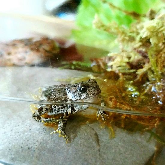 Check This Out Found In The Yard Froggy Babyfrog In Water Waterfront Swimming Around Socute Tiny Creature Fun Animals