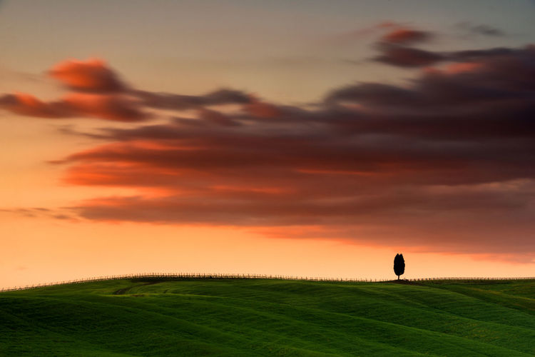 Silhouette of an isolated tree  on the field against sky during sunset in val d' orcia