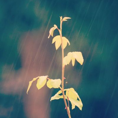 Tears of joy are like the summer rain drops pierced by sunbeams. Summer End Moonson Arrived Greenleafs Torns RainyDay Picoftheday Pic4U Instaregular Instarain Instacloudyday Photomania Instalovenature Lovetherainyday Dayend Follow4photo Follow4follow .