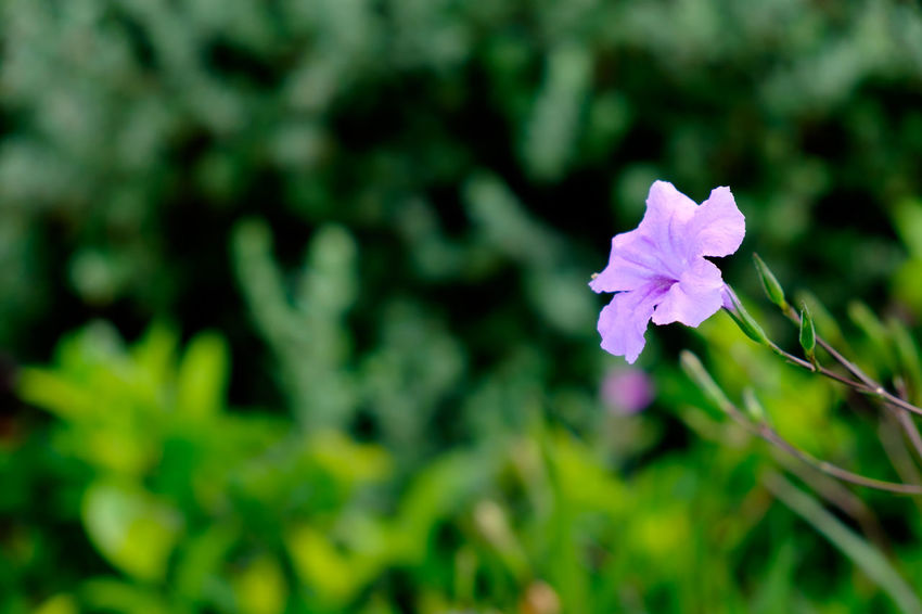 Beauty In Nature Blooming Close-up Day Flower Flower Head Focus On Foreground Fragility Freshness Green Color Growth Nature No People Outdoors Petal Plant Springtime