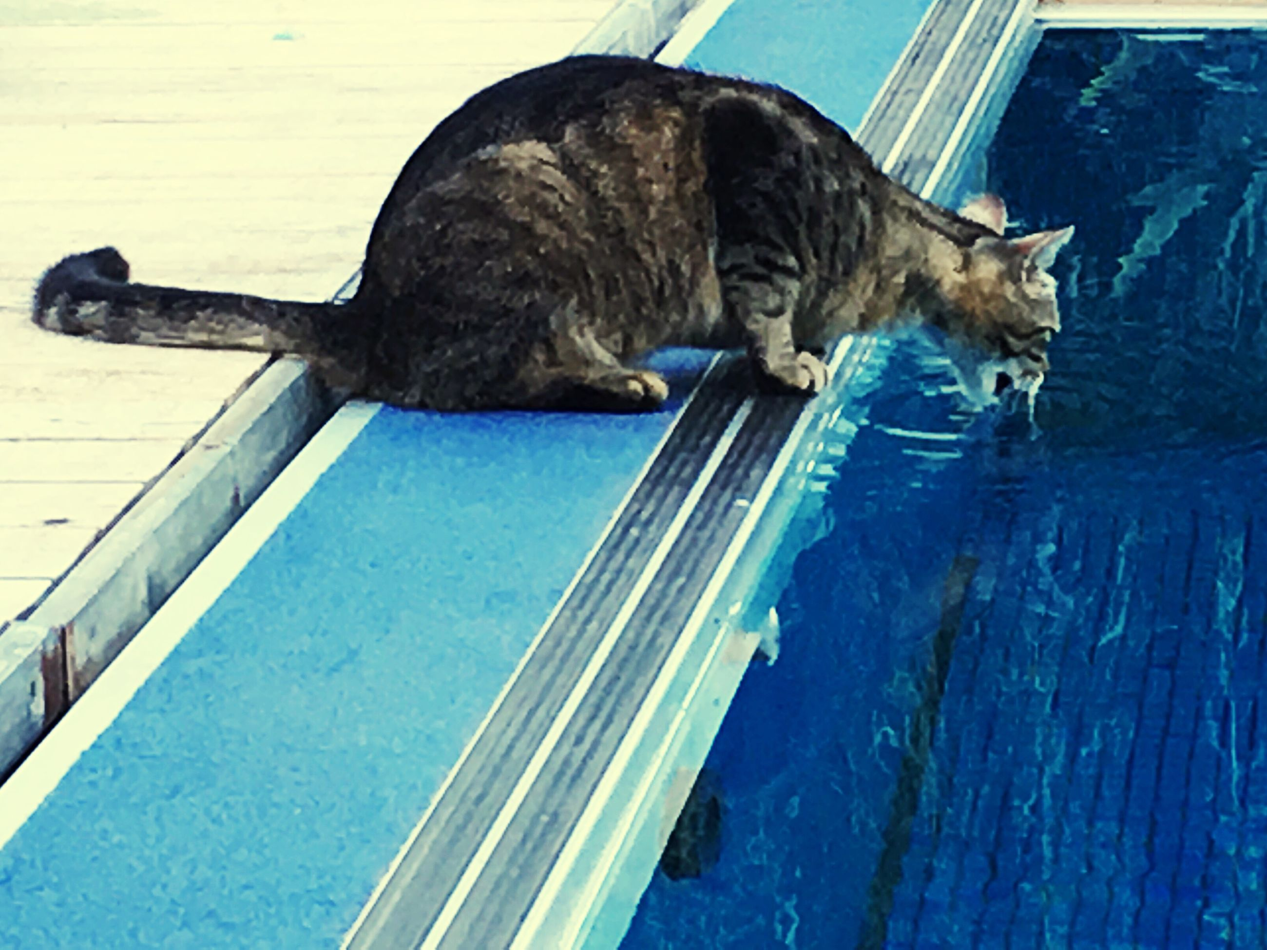 one animal, animal themes, day, domestic cat, no people, outdoors, full length, mammal, close-up, water