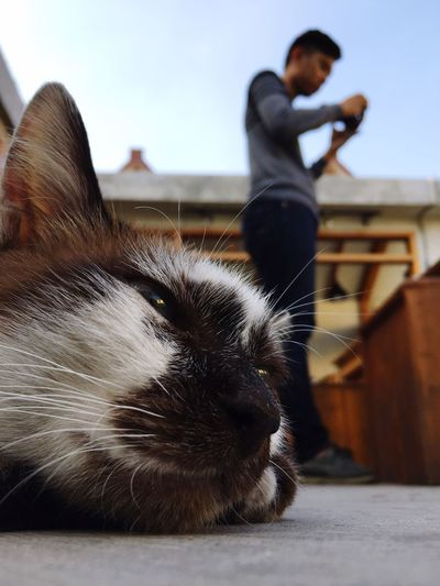 Cat home Cat Domestic One Animal Mammal Pets Domestic Animals Real People Vertebrate Sky One Person Focus On Foreground Lifestyles Day Leisure Activity Nature Canine Pet Owner Outdoors