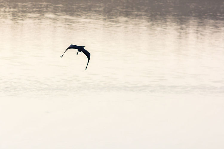 Animal Themes Animal Wildlife Animals In The Wild Beauty In Nature Bird Day Flying Motion Nature No People One Animal Outdoors Scenics Sea Silhouette Spread Wings Sunset Water Waterfront