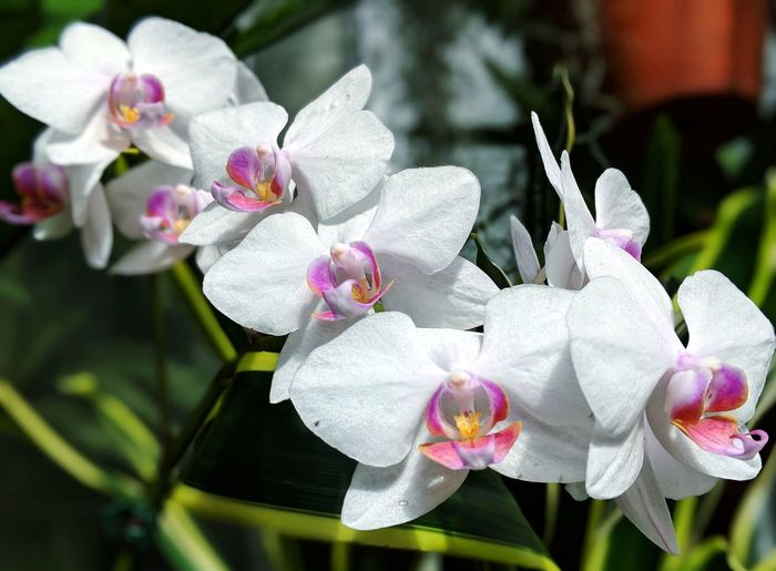 White Orchids Northcarolina Visitnc Flowers,Plants & Garden Inside Orchid Orchids Orchid Blossoms Flower Conservatory White Pink Green Fresh