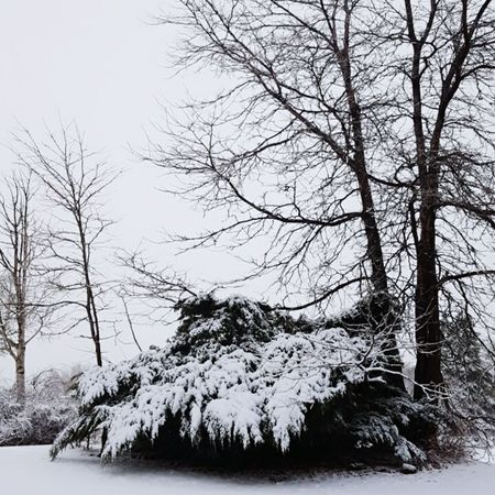 Tree Bare Tree Nature Branch No People Snow Winter Cold Temperature Tranquility Outdoors Beauty In Nature Scenics Silhouette Throughthelens Outdoor Photography Optoutside Nikon Trees Bushes Snow Covered White Color Black & White Blizzard Serenity Winter Wonderland
