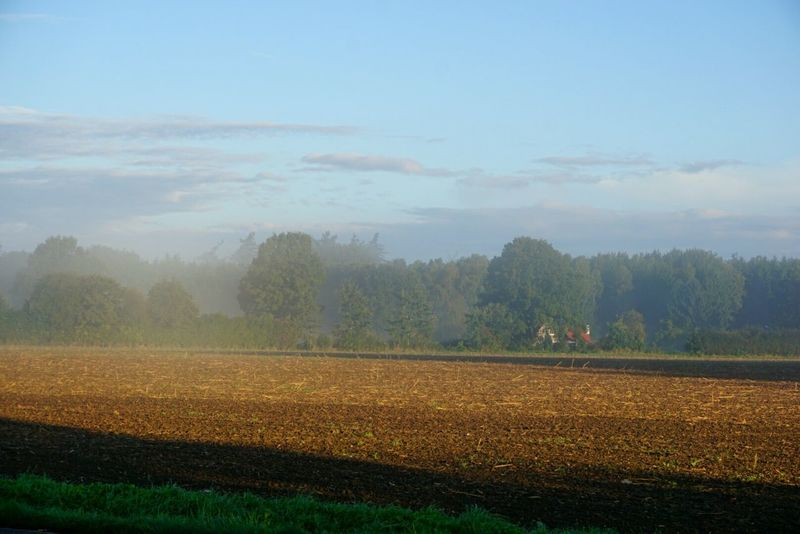 Foggy morning Agriculture Field Rural Scene Crop  Nature Farm Tree Landscape Outdoors Fog Growth Scenics Beauty In Nature Tranquil Scene No People Cloud - Sky Day Sky Autumn Cereal Plant Foggy Morning Landscapes Landscape_photography Landscape_Collection Sunrise_Collection