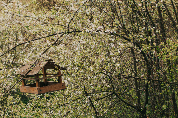 Low angle view of cherry tree in forest