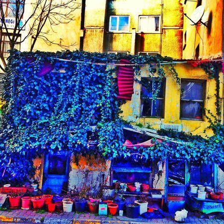Istanbul Küçükçekmece Kucukev şirinevler Kedi Kedicik Yeşil