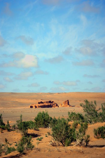 Gobi Desert Mongolia Saxaul Trees Arid Climate Beauty In Nature Environment Landscape Nature No People Outdoors Scenics - Nature Sky Tranquil Scene Tranquility Говь- Монгол улс