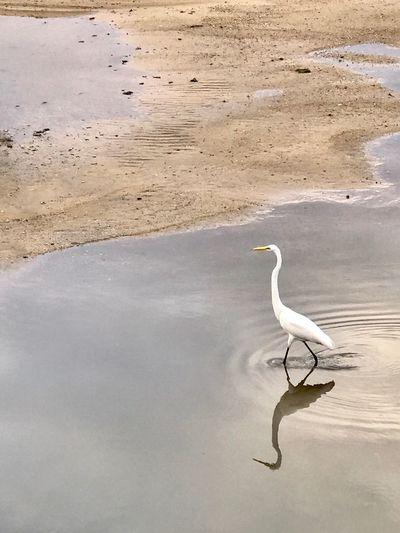 One Animal Animals In The Wild Bird Animal Themes Animal Wildlife Heron Water