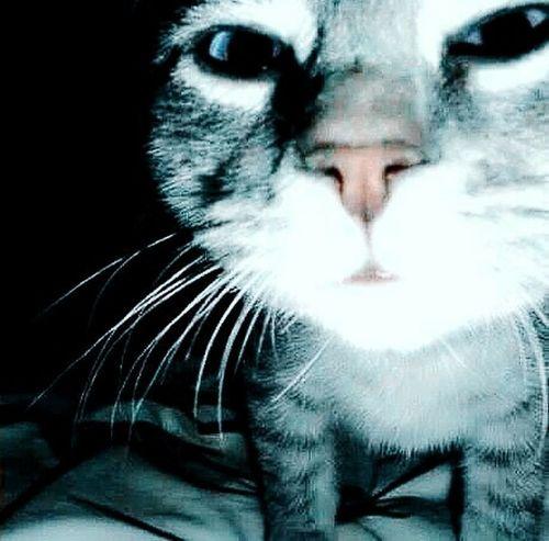 That's Devil cats.My daughter. 😨 Cat Cute Pets Cat Eyes Cute Cats Cat Lovers Cats Of EyeEm Cat Watching Eyeem Nice Shots