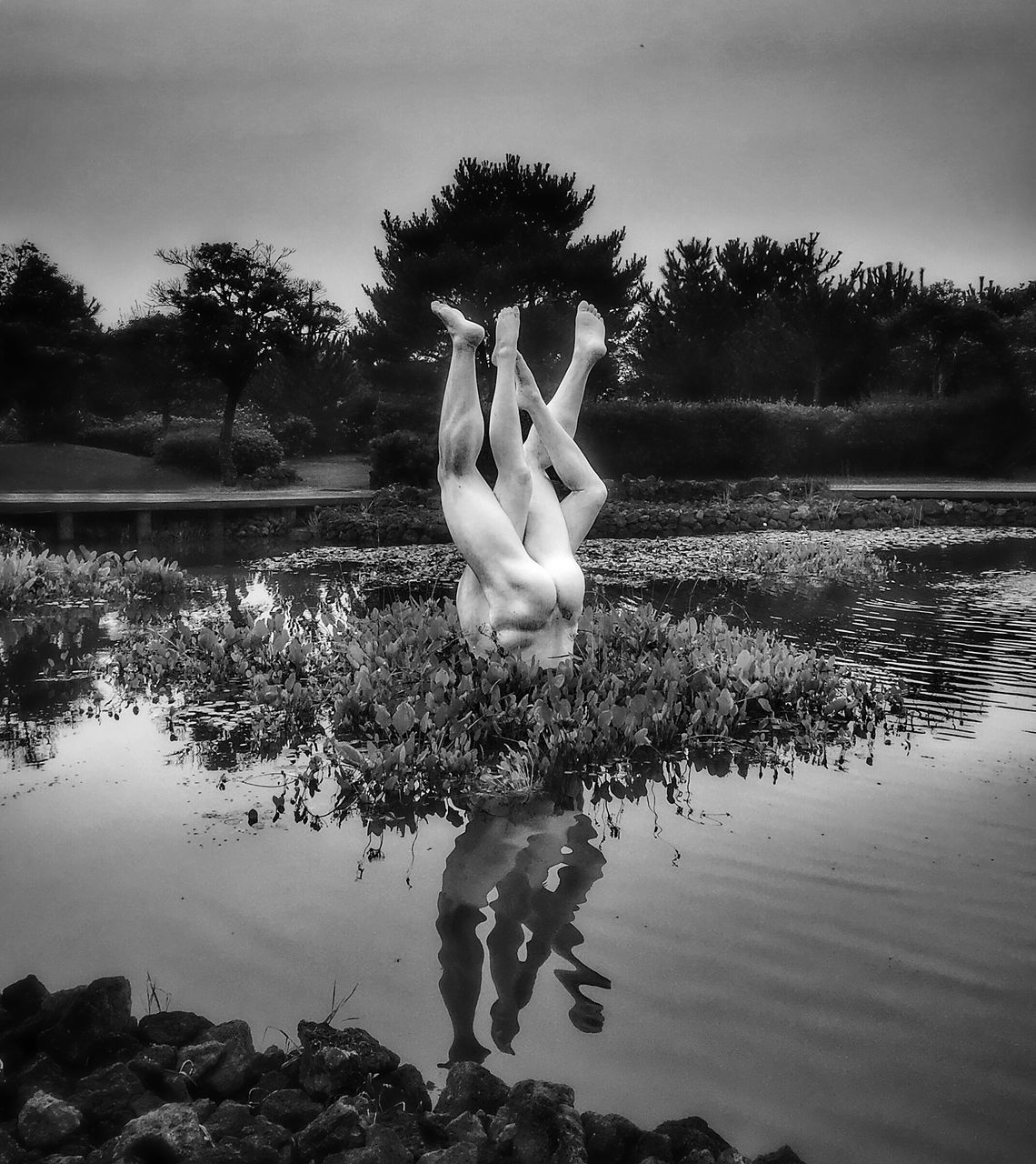 SWAN STANDING ON LAKE AGAINST SKY