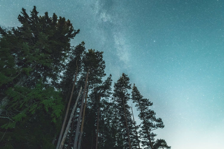 Top of the world. Tree Low Angle View Sky Nature Forest Pine Tree Beauty In Nature Star - Space No People Outdoors Milky Way Galaxy Space Astronomy Green Color Pentax Sweden Scenics Galaxy Nature Beauty In Nature Star Field Space And Astronomy Long Exposure Low Angle View