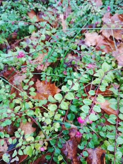 Perspectives On Nature Leaf Plant Growth Day Nature Green Color Outdoors No People Beauty In Nature Close-up Full Frame Ivy Fragility Freshness EyeEmNewHere Greenwarden