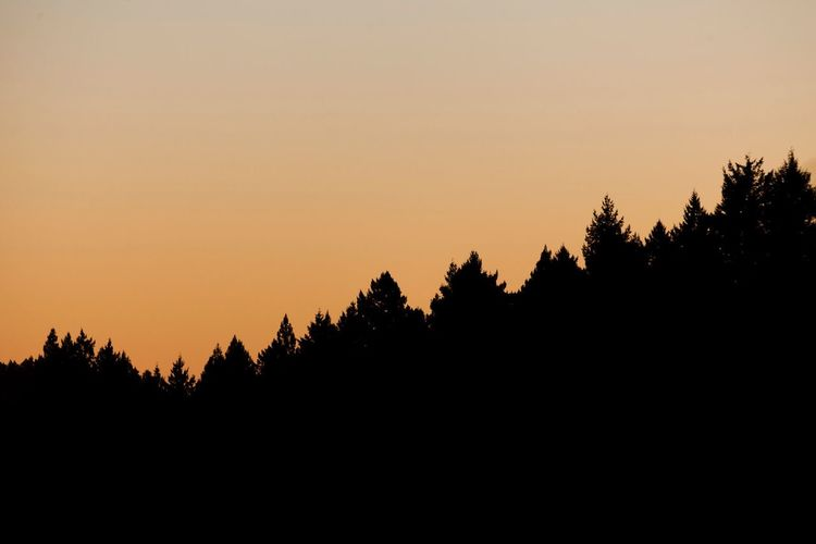 Silhouette Tree Sunset Nature Beauty In Nature Scenics Tranquil Scene No People Tranquility Landscape Clear Sky Outdoors Sky Day Redwood Trees Redwood Forest California