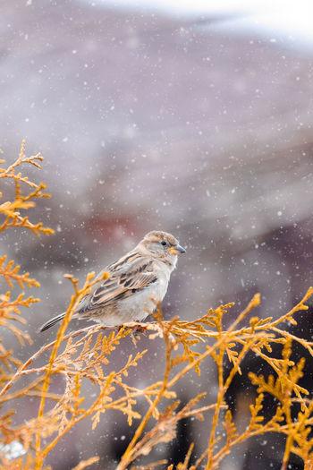 View of bird perching on snow