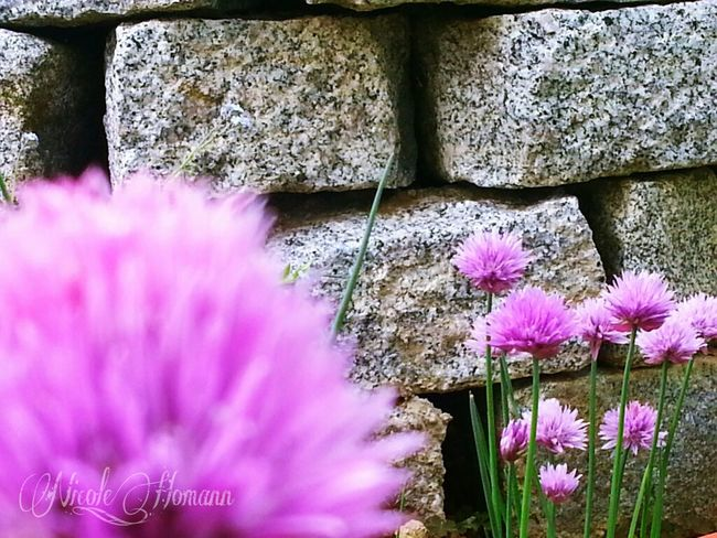 Flowers Wall Pink Flower Nature_collection