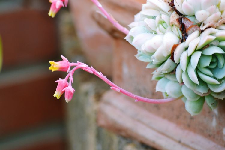 Flower Head Flower Pink Color Close-up Plant Plant Life In Bloom Blooming