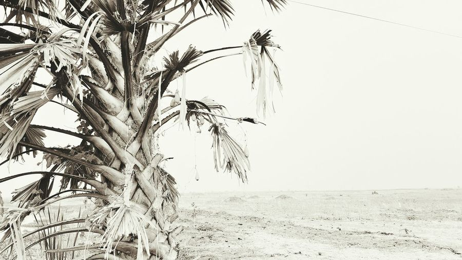 Blackandwhite Photography Outdoor Photography Blackandwhite Outdoors No People Landscape Northern Nigeria