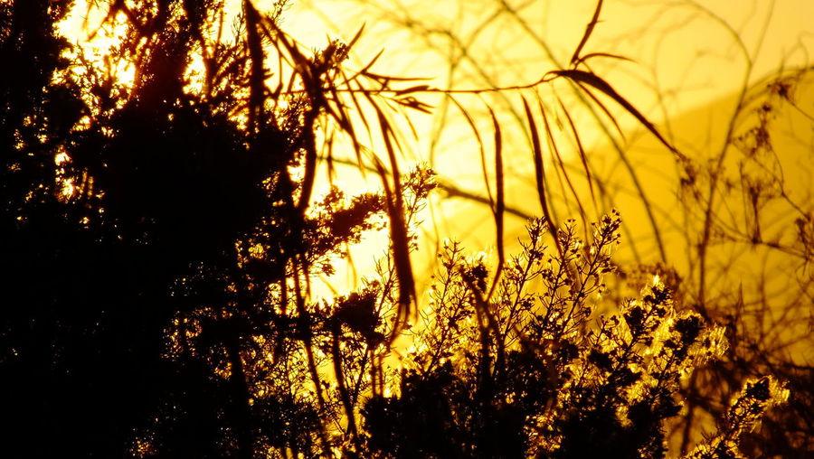 Sun-collection EyeEm Nature Lover