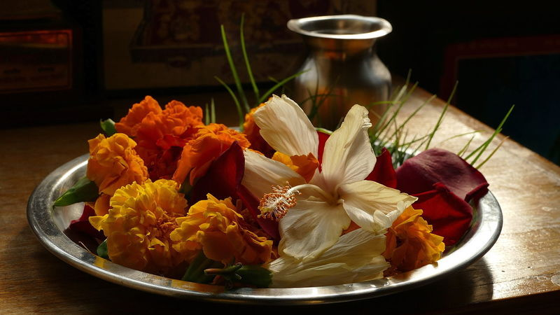 Prayer Flowers Flower Freshness Beauty In Nature Close-up No People Nature Petal Inflorescence Flower Head Still Life Focus On Foreground Pooja Flowers Morning Rituals In India Prayer Flowers Glowing Flowers Backlit Flowers The Beauty Of Flowers🌹 Prayer Preparations