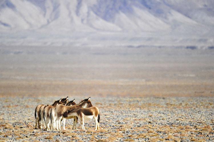 Animals On Field Against Mountain