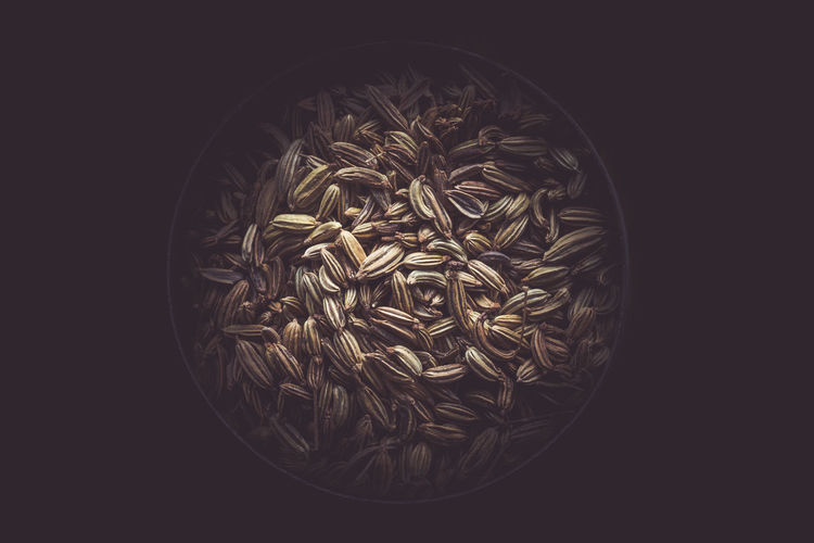 Cumin Black Background Circle Close-up Copy Space Copyspace Cumin Cut Out Directly Above Flower Flowering Plant Food Food And Drink Freshness Geometric Shape Healthy Eating Indoors  No People Shape Single Object Still Life Studio Shot Wellbeing