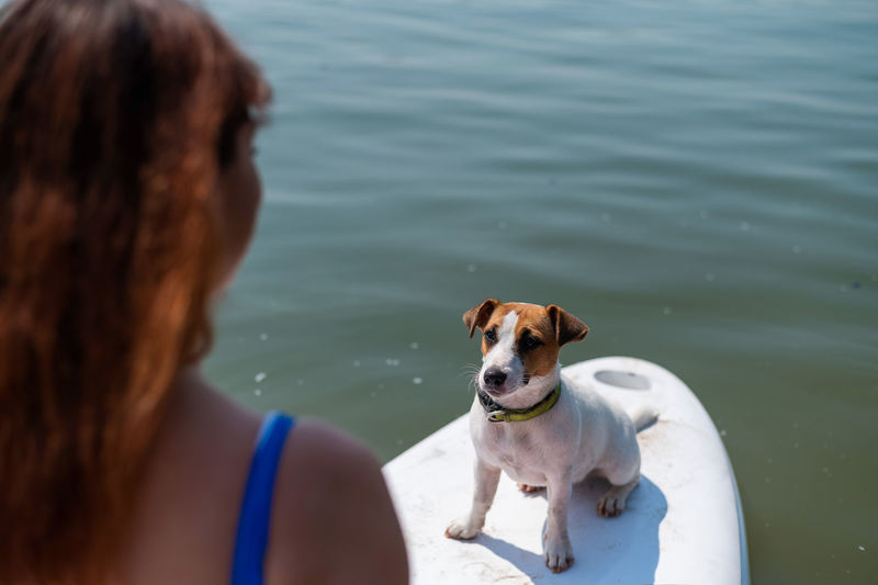 Rear view of woman with dog in water