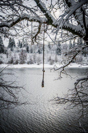 Bare trees by lake during winter