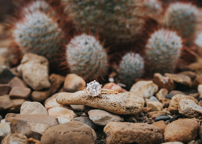 Close-up of ring on pebble against cactus