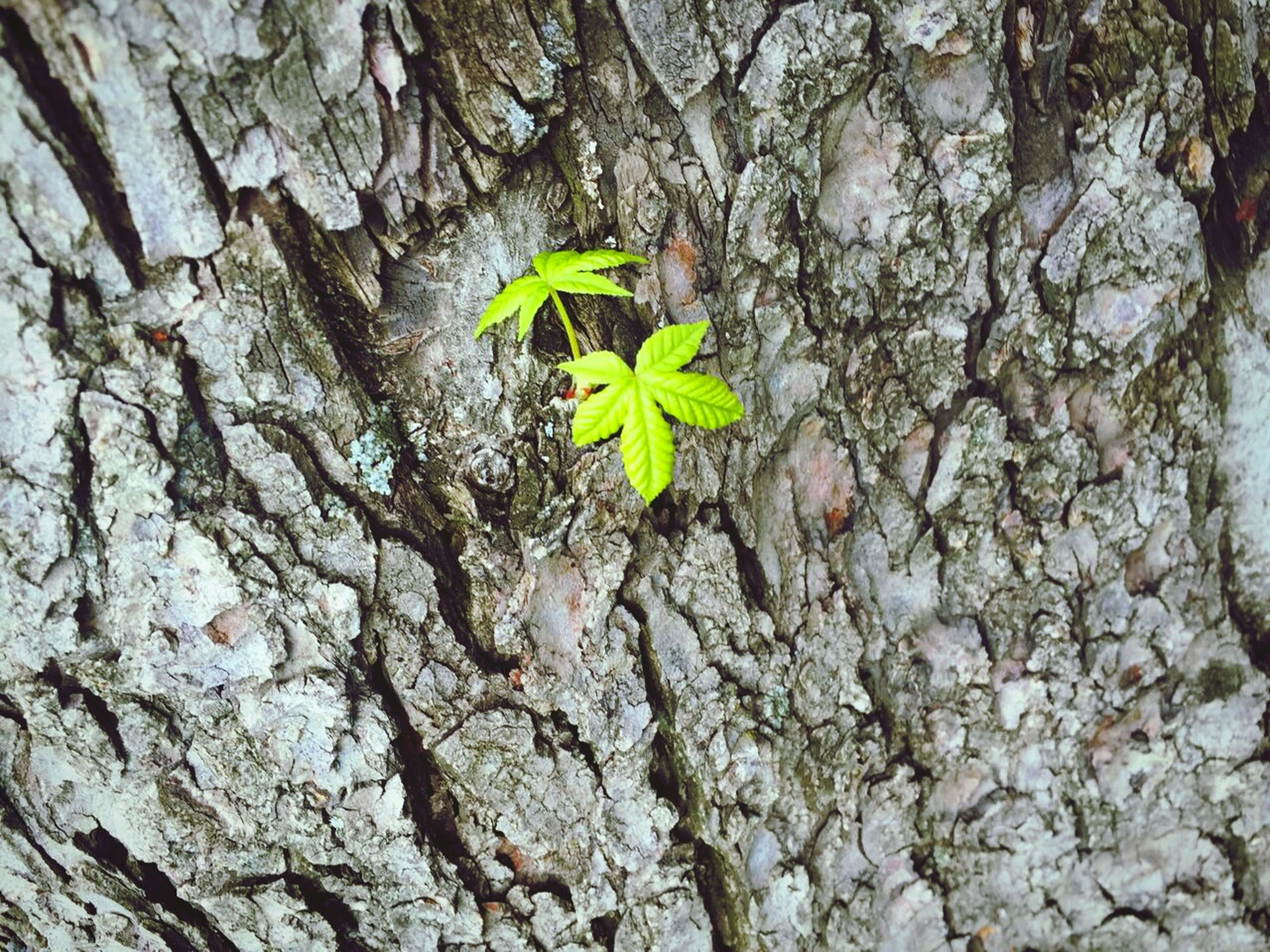 nature, growth, leaf, green color, plant, no people, tree, fragility, outdoors, textured, day, beauty in nature, close-up, branch, freshness