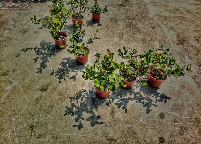 LINE Streetphotography Lightandshadow Nature Shadows & Lights Potted Plant Sunlight Green Color GreenGreenGreen Hight Angle View Plant Life